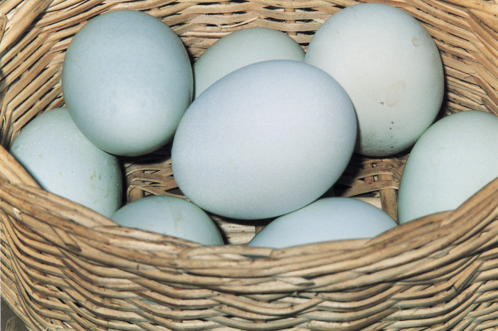 10 Alternative Uses for Eggs - Slow Food International