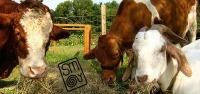 Boas notícias do Slow Meat
