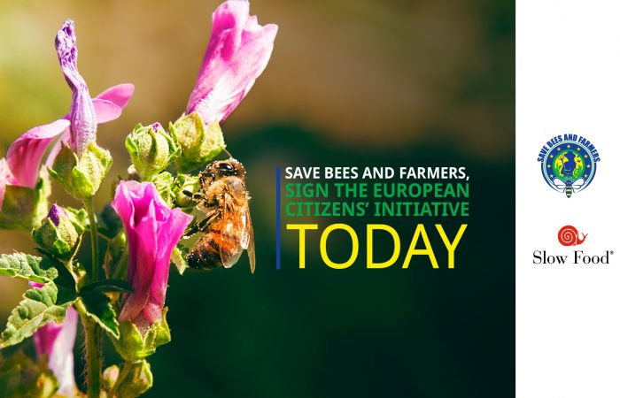Slow Food Europe: The New EU Biodiversity Strategy Must Protect Bees and Pollinators