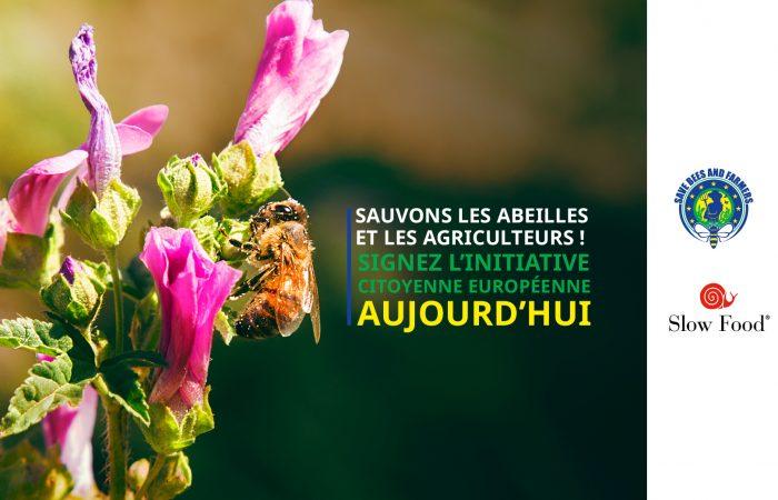 Slow Food Europe : la nouvelle stratégie européenne sur la biodiversité doit protéger les abeilles et les pollinisateurs