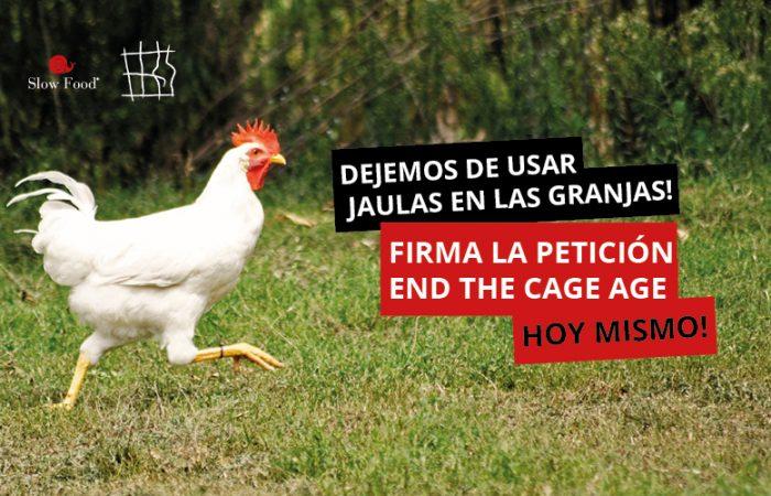 Ha llegado la hora de decir basta a las jaulas: ¡firma la petición!