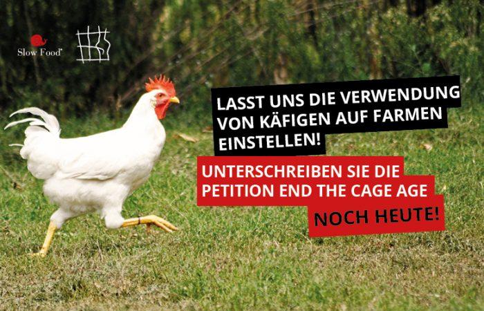 Es ist Zeit zu sagen: Schluss mit den Käfigen! Unterschreiben Sie die Petition!