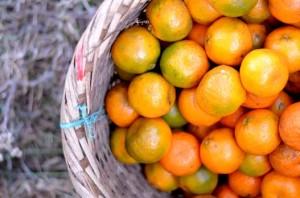 Khasi-mandarin