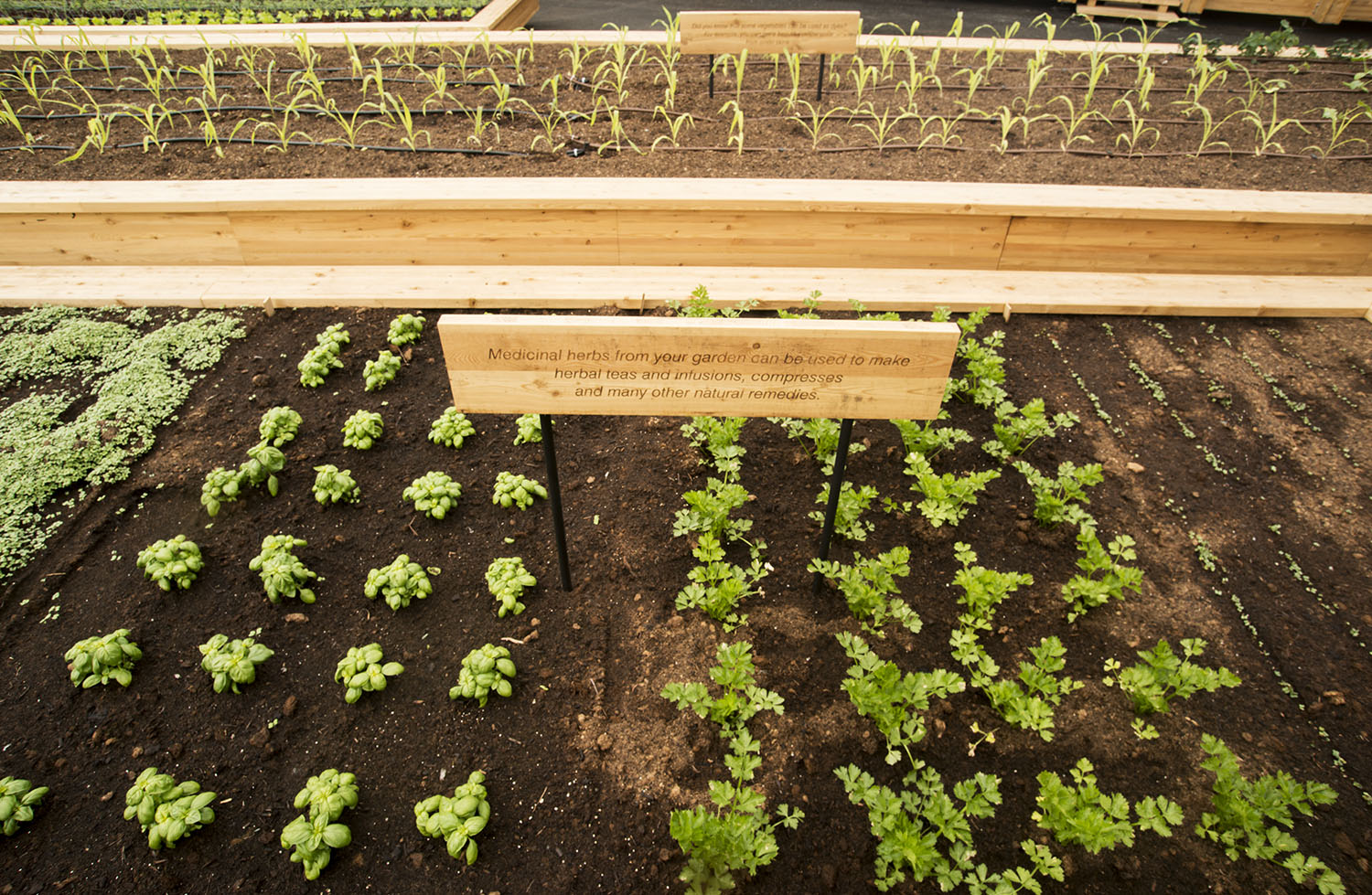 Making Your Own Vegetable Garden At Home Seven Tips From Seed To