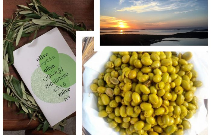 The Olive Brings Solidarity and Peace Once Again