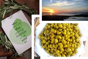 Slow Olive: l'Olivier, une Nouvelle Fois Symbole de Paix et de Solidarité