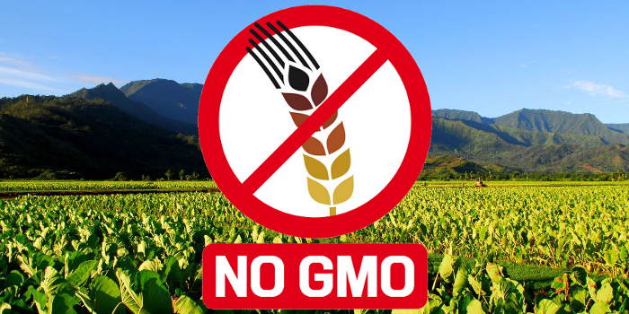 Unlabeled, untested Genetically Modified Foods including animals to be unleashed on Australian consumers, farmers and exporters if the Gene Technology Amendment is defeated in the Senate on November 13, 2019