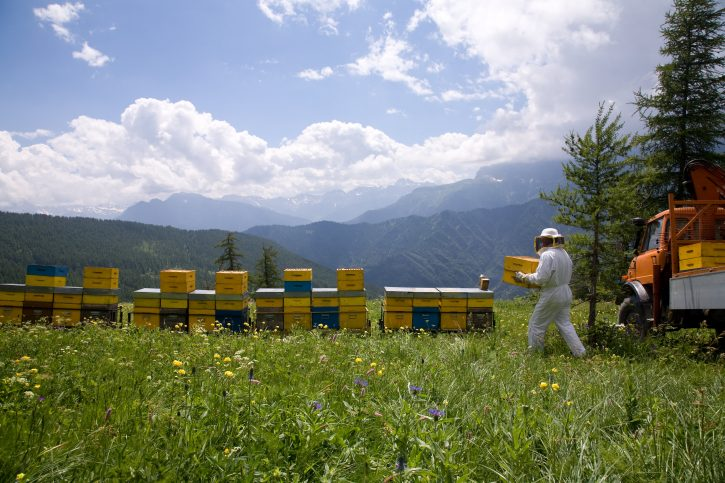 api miele slowfood