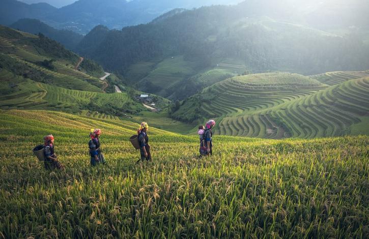 China fields