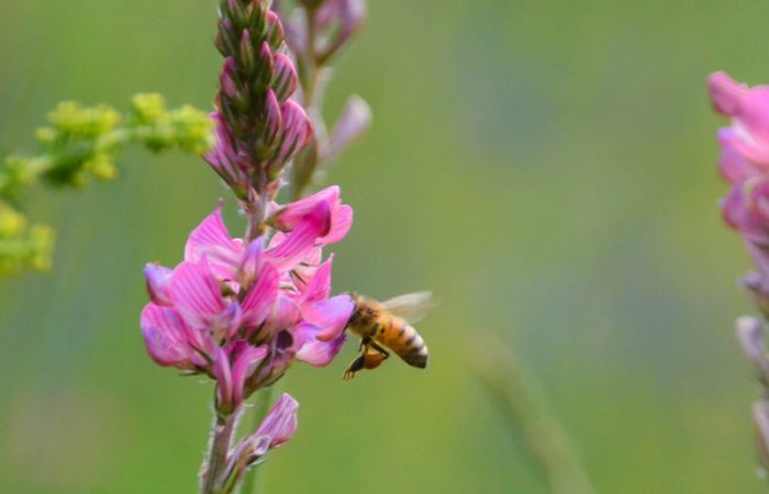 On World Bee Day  Slow Food Launches an Action to Save the Bees