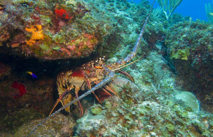 Se incide en políticas públicas, de pesca sostenible, agricultura y turismo comunitario en el Archipiélago de San Andrés Providencia y Santa Catalina