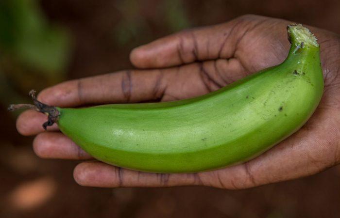 Slow Food em Uganda: Através da lente de um cineasta
