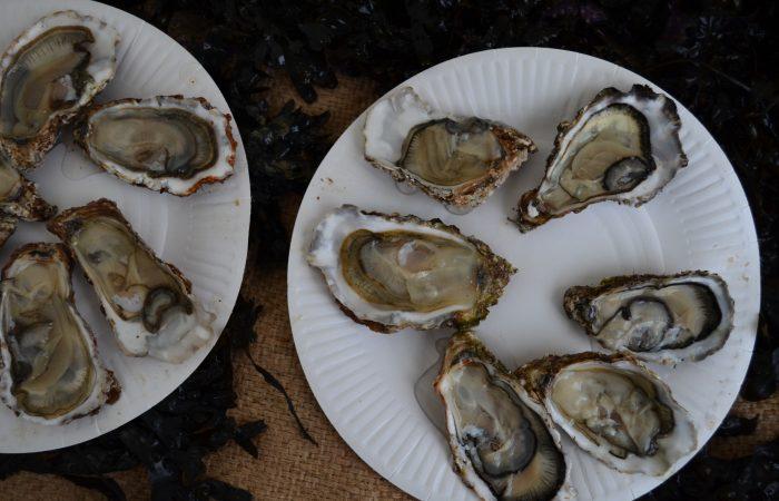 Tifenn y Jean Noël Yvon: productores de ostras de Bretaña enfrentándose a las estaciones