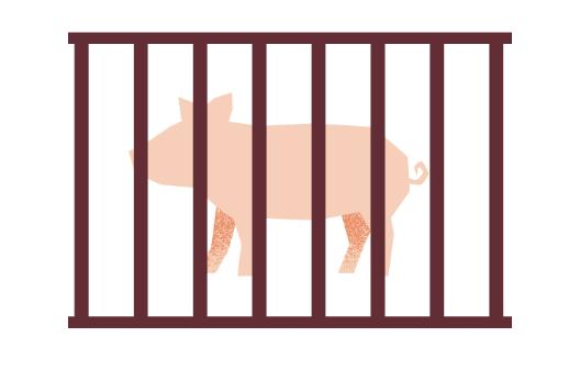 Animal Welfare According To Slow Food - Slow Food