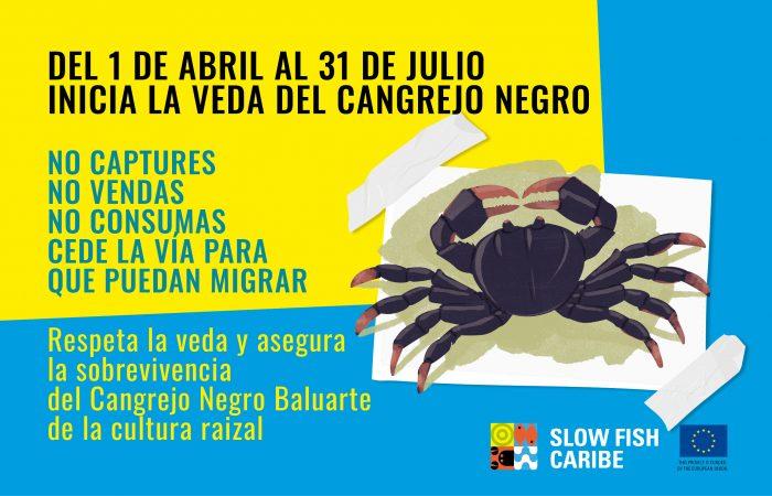 El Cangrejo Negro del Archipiélago de San Andrés, Providencia y Santa Catalina.