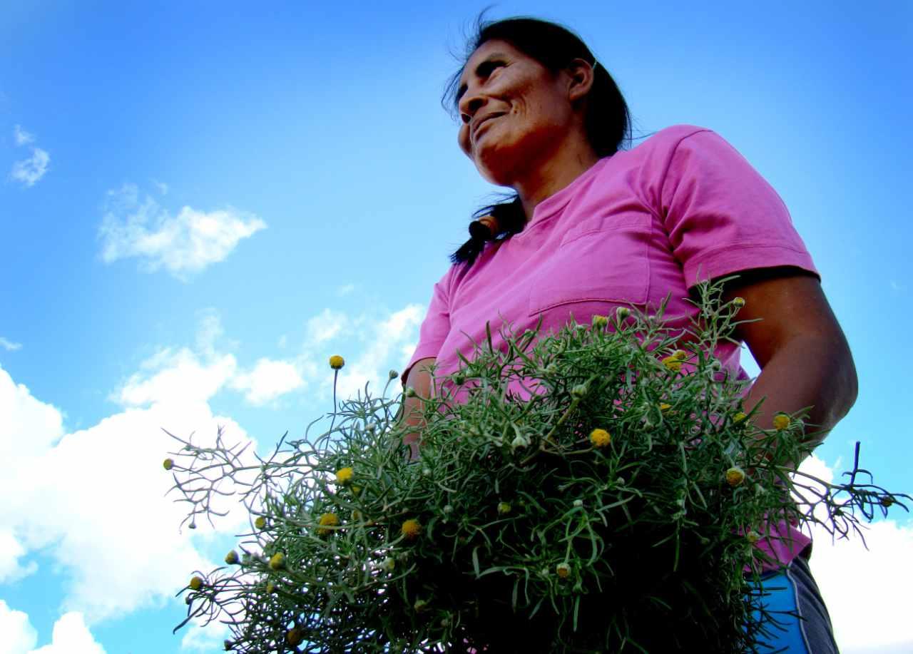 Gran Chaco Wild Fruits: a Female Affair - Slow Food International