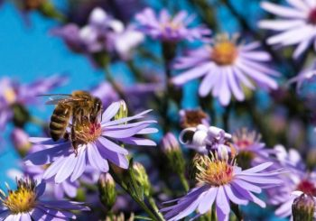 "Slow Food joins the ECI ""Save Bees and Farmers"""