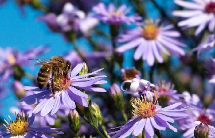 Zum Weltbienentag lanciert Slow Food eine Initiative zur Rettung der Bienen
