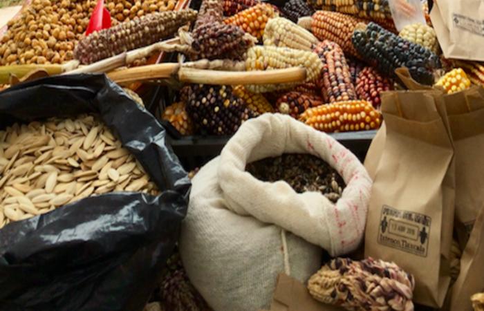 Pueblos, movimientos campesinos y academia en defensa de las semillas criollas en México