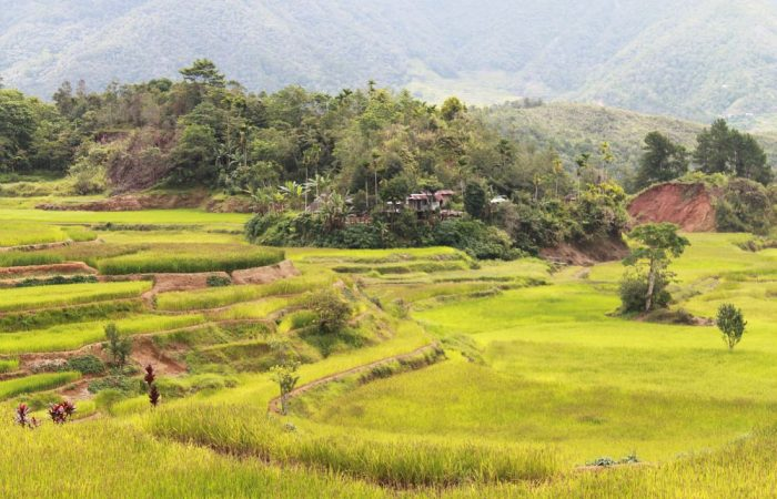 In Search of the Food Biodiversity that lies beyond the Rice Terraces of the Cordillera!