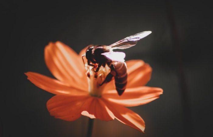 Slow Food Europe: the EU Urgently Needs Rigorous Bee Safety Standards