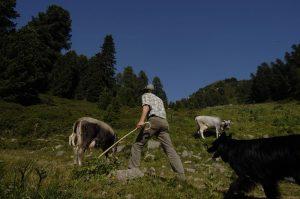 Das Weidebuffet - Oder weil wir Grasmilch bevorzugen sollten