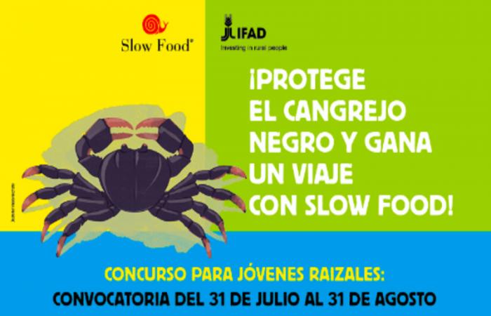 La importancia del Cangrejo Negro se refleja en el arte: Concurso para jóvenes raizales