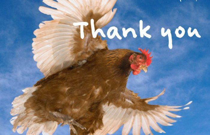 Un día histórico para los animales: La Iniciativa Ciudadana «End the Cage Age» cierra con más de 1,5 millones de firmas