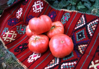 A festival for the Kurtovo Tomato Presidium