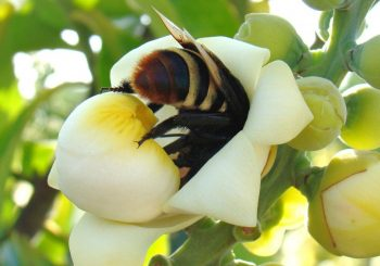 Killer Pesticides Decimating Bee Populations in Brazil: Half a Million Bees Dead in Just Three Months