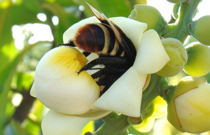 Brasil: agrotóxicos matam meio milhão de abelhas em apenas  três meses