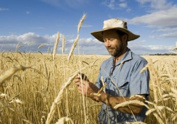 """""""The Gene Technology Amendment puts Australian families at risk of eating untested, unlabeled genetically modified foods – including animals"""""""