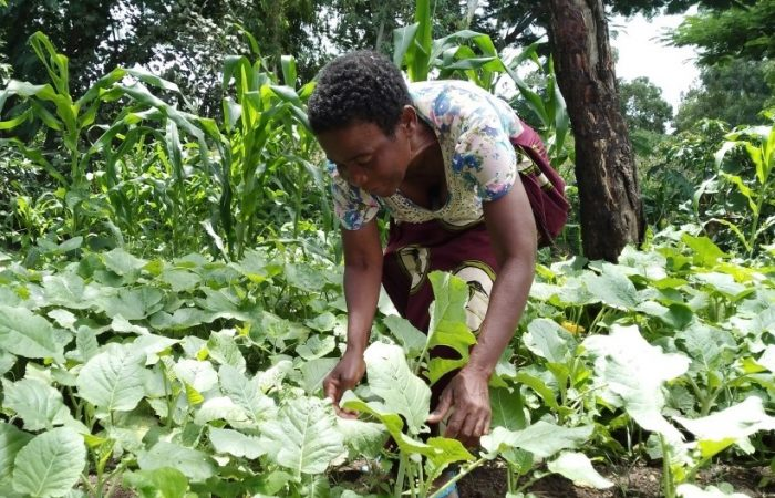 Historias para celebrar 30 años de trabajo. Proyecto de huertos en Malawi: cómo cultivar el cambio