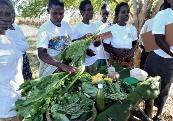 30-Year Celebration Stories: Cultivating Change with the Malawi Gardens Project