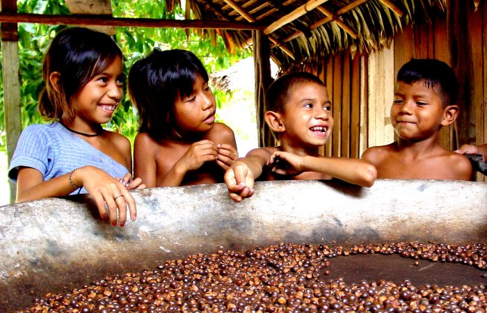 A victory for good, clean and fair food for everyone: children Amazonas will have indigenous food for school meals!