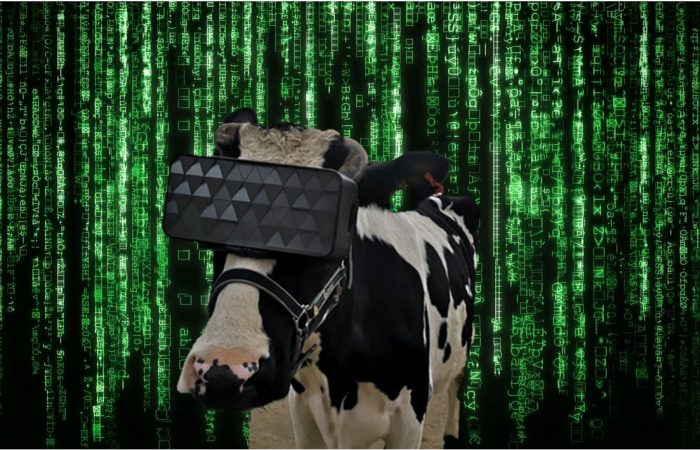 The Mootrix: could VR simulations substitute access to pasture for cows?