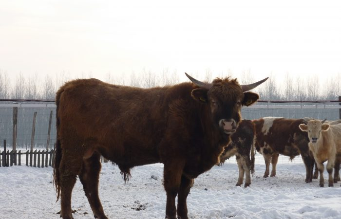 A broken system: how EU farming subsidies lead to land grabbing in Hungary