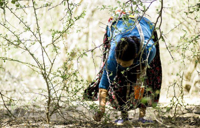 Respetando la tierra y buscando conocimiento ancestral después de COVID-19