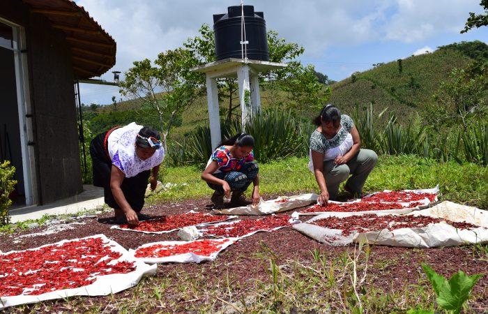 Las mujeres indígenas nahua rompen barreras