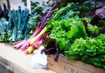 Gärtnergemeinschaften: Gartenbau und Agrarökologie im weltweiten Slow-Food-Netzwerk