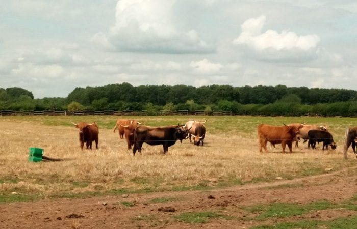 Meat the Change: Eric Sanceau, un éleveur Slow qui se bat pour la durabilité et les races locales