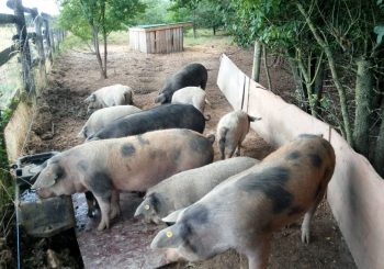 Meat the Change: Eric Sanceau, a Slow Farmer Fighting for Sustainability and Local Breeds