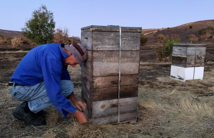 Australia's Beekeeper Strengthen Community Amidst the Crisis