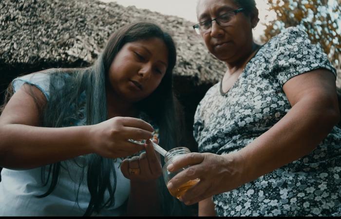 Baluartes de Yucatan, Conocimiento Ancestral