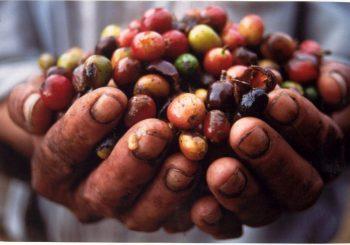 Comunidades Indígenas, Tradicionais e Afrodescendentes ao Redor do Mundo Protegendo a Biodiversidade