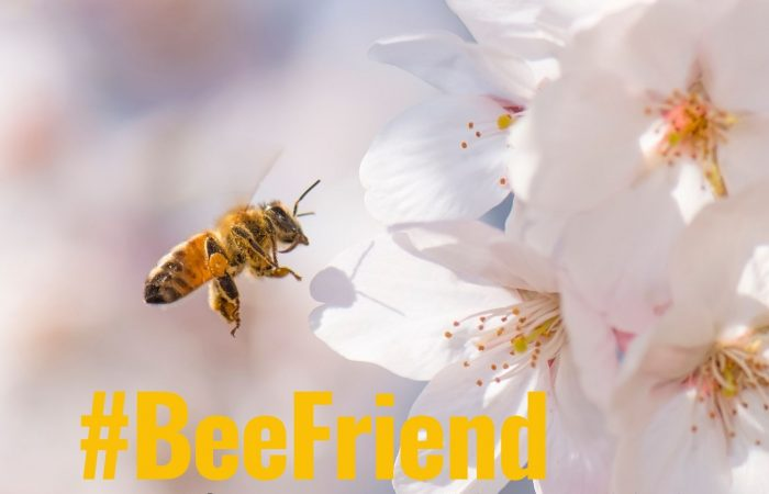 #BeeFriend: 10 Small Things You Can Do to Save the Bees