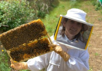 A Young Beekeeper from Sicily: about the bee life, different types of honey and pesticides