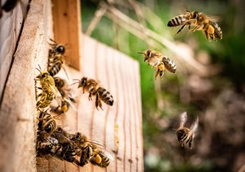 Ecological transition in agriculture is the only way to save bees