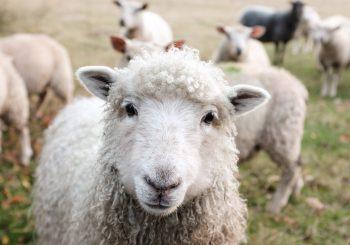 A Política Agrícola Comum da UE: aspectos importantes que você precisa saber