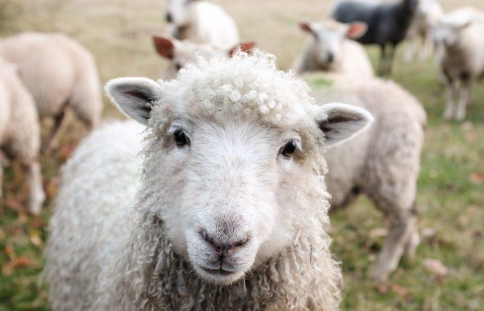 Wissenswertes über die Gemeinsame Agrarpolitik der EU